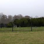 liberty hall cemetery
